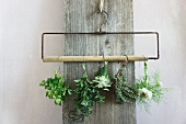 Drying chervil, marjoram, cow parsley, thyme, nigella on a clothes hanger