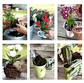 Potting up assorted plants in plant pots