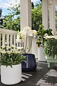 White and yellow flowering potted plants on veranda