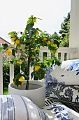 Yellow flowering potted plant amongst white and blue scatter cushions on balcony