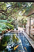 Fish pond in South-African garden adjoining modern bungalow