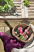 Korb mit Rosen auf Gartenstuhl