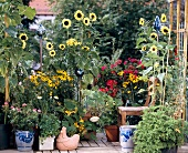 Summer flowers and vegetable plants in containers on terrace