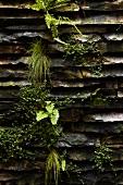 Natursteinwand mit Moos, Farn und anderen Pflanzen