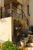 Outside steps leading to old country house with wrought iron balustrade and shelves of potted plants