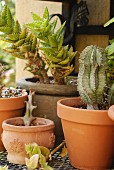 Various types of cacti in terracotta pots on wrought iron shelf