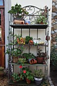 Metal, flower display stand with plant pots and decorative objects