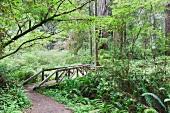 Rustikale Brücke über einen kleinen Fluss im Redwood- Nationalpark