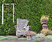 Old, discarded wicker armchair in front of large, green garden hedge