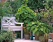 Sommerlich blühender Balkon mit großem Funkientopf