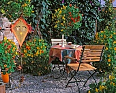 Flowering nasturtiums on garden terrace