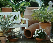 Terracotta planters holding small olive tree, geraniums and date palm on sunny garden terrace