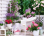 Blooming balcony in shades of rose, hot pink and purple with white wicker chair and white planters