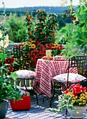Flowering balcony in late summer with cheerful tablecloth on balcony table