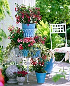 Fuchsias, impatiens and busy lizzies in blue planters, metal étagère and pine cone ornaments on terrace
