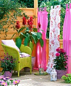 Balcony with wicker armchair, curtains, dahlias, climbing roses and amaranth