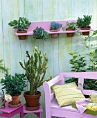 Plants in terracotta planters (prickly pear, jade plant, bacopa) on terrace with wall-mounted shelf and pink bench