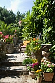 Flowering plants in terracotta pots on floor and half-height wall next to steps in Mediterranean garden