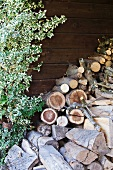 Stack of firewood against wooden wall