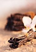 Vanilla pods and vanilla flower