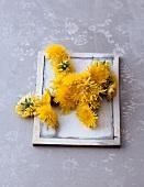 Dandelion flowers on wooden tray