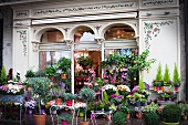 Various potted plants in front of florist shop
