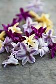 Hyacinth florets