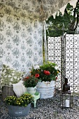 Floral pattern on inner tent wall and various potted plants on gravel floor