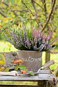 Potted heather (alpine heather, Erica carnea) and garden trowel on rustic wooden table outside