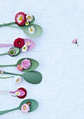 Bellis daisies on silver spoons partially painted on wooden surface