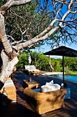 Comfortable rattan furniture below gnarled tree on sun terrace