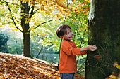 Little boy touching a tree trunk in autumnal woodland