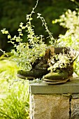Potted plants in old walking boots on coping of stone wall in garden