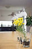 Row of yellow flowers in glass vases on wooden table below modern pendant lamps with small glass lampshades