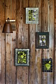 Small framed photographs of birch leaves on wooden wall
