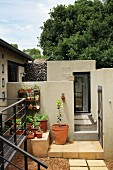 Urban terrace garden of architect-designed house with planted terracotta pots against grey concrete wall