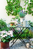 Gravel terrace with flower bed, planters and climbing plants on facade; watering can and amphora of lavender on metal tray table