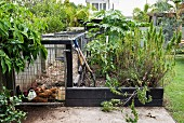Chicken coop and bed with wooden edging in kitchen garden adjoining house