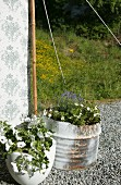 Flowering plants in containers on gravel floor in front of tent