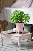 Basil plant in pink sieve on old stool