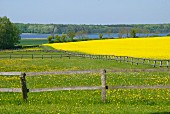 Romantic view of lake and forest across meadow and field of flowering oilseed rape