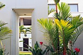 Palm trees and tropical plants flanking open doorway leading to house