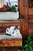 Cat lying on wooden bench outside wooden cabin