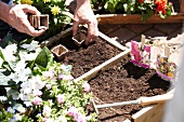 Square foot gardening: hands placing fibre pots in soil