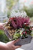 Autumnal arrangement of ivy, straw and heather in wooden crate