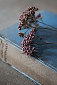 Dried flowers laying on old book