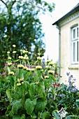 Flowering plants in garden in front of house