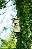 Nesting box on ivy-covered tree trunk