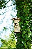 Nisthäuschen an einem Baumstamm mit Efeuranken