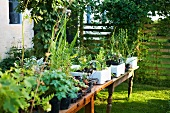 Various potted plants on garden tables in front of house